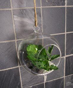 Ce coffret air terrarium sera parfait pour créer une composition originale et unique selon vos goûts et vos envies ! Voilà de quoi ajouter une belle décoration dans votre intérieur !