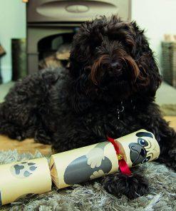 Un cracker rempli de cadeauxPour les plus gentils des toutousA offrir à votre chien