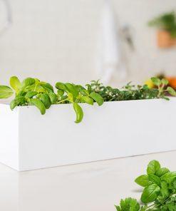 Aromatisez tous vos plats avec du basilic et de la coriandre cultivés par vous-même !