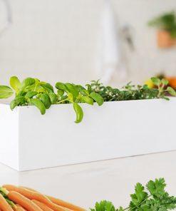 Créez votre propre jardin d'intérieur et cultivez des carottes et du mesclun