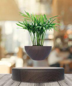 Composez votre mini-jardin (cactus ou succulentes) et faîtes-le flotter dans les airs ! 3 Couleurs disponibles.