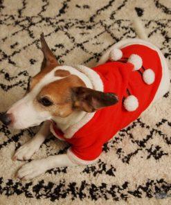 Un costume de Noel pour votre toutou et disponible en 4 tailles