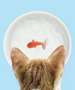 Pour rendre dingue son chat (comme s'ils en avaient besoin !) voici un bol original